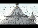 Flight of freedom: Independence Day at India's Jama Masjid