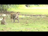 'We are family' - gay and gleeful Macaques!!