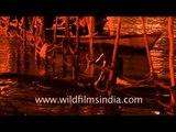 Naga sadhu taking holy dip in river Ganga during Kumbh mela
