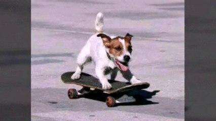 Cute dog skateboarding