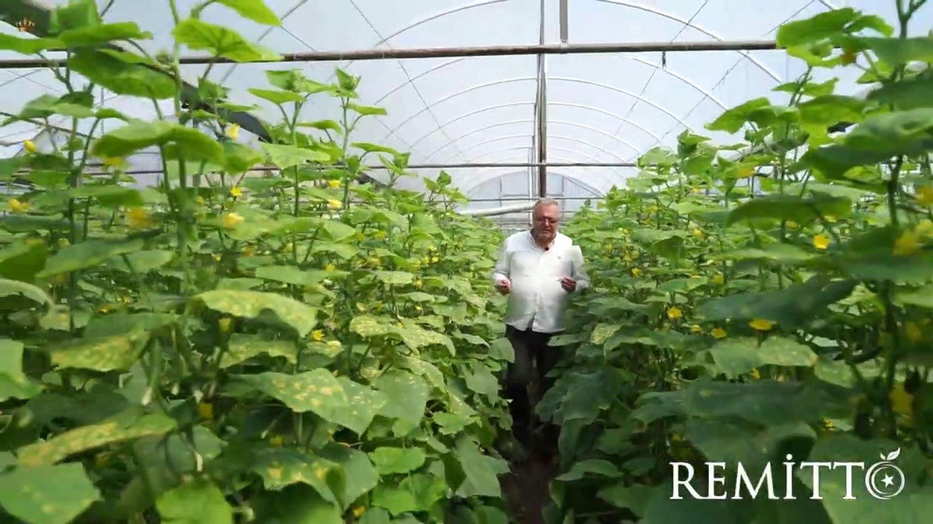 Remitto Tohum | Tazem Badem Hıyar  - Yemekli Ürün Tanıtımı ²⁰¹⁹