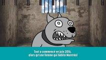 Les petites infos_-  le nouveau règlement sur les chiens dangereux