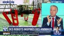 Des robots inspirés des animaux