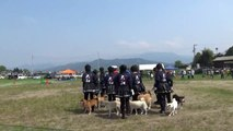 K9名物!犬の集団行動演技 松山チーム(大和)
