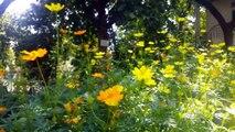 Breathtaking Colors of Nature in 4K II Beautiful Nature Sleep Relax Music 4K UHD TV Screensaver