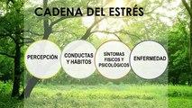TED-Meditación y estrés-Dr. Daniel López Rosetti