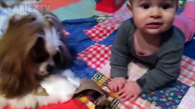 Adorable Babies Playing With Dogs and Cats - Funny Babies Compilation