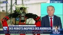 Quand la robotique s'inspire de la nature