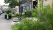 Le service espaces verts d'Alençon a dû abattre un arbre après qu'il a été percuté par un camion.