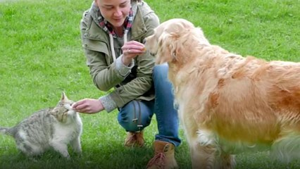Dog Owners Top Cat Owners in Terms of Happiness