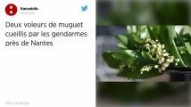 Un millier de brins de muguet volés près de Nantes à la veille du 1er mai