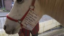 Watch: Mare who trots around town on her own is not horsing around