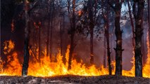 Winnie-the-Pooh's Real-Life Hundred Acre Wood Caught Fire