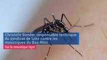 La surveillance du moustique tigre reprend en Alsace
