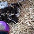 Admirez ces mignons petits canards. Trop cute !