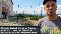 Insolite : des moutons tondent la pelouse de la prison de Valence