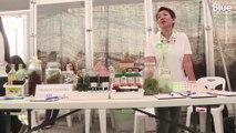 Le premier festival de la marijuana vient d'être organisé en Thaïlande