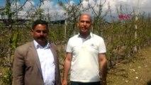 Niğde'de, Dolunun Vurduğu Meyve Bahçelerinde Hasar Tespiti