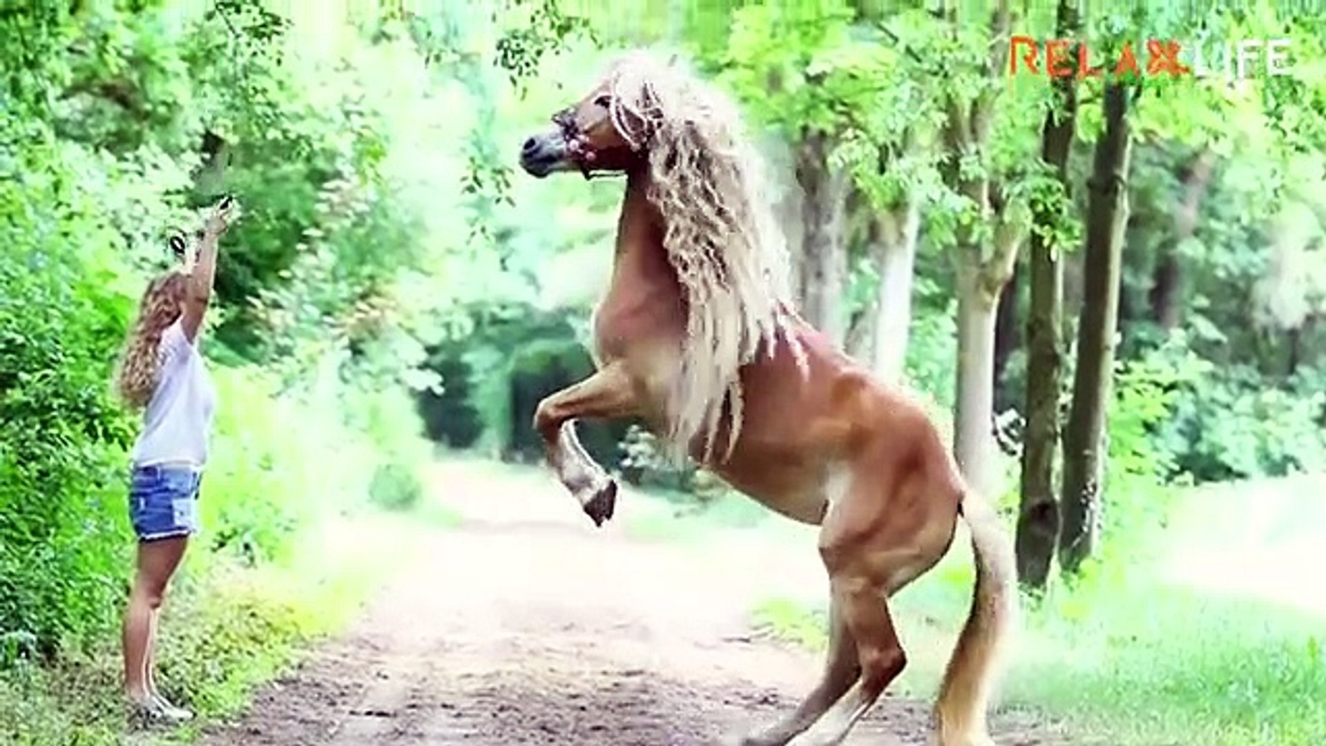 Beautiful animals beautiful horse video gone viral