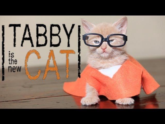 Orange is the New Black (Cute Kitten Parody)