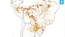 Yann Arthus-Bertrand : «On a perdu le combat contre le changement climatique»