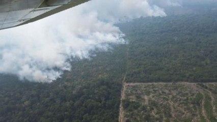 L'Amazzonia brucia ancora, Bolsonaro pronto a mandare l'Esercito
