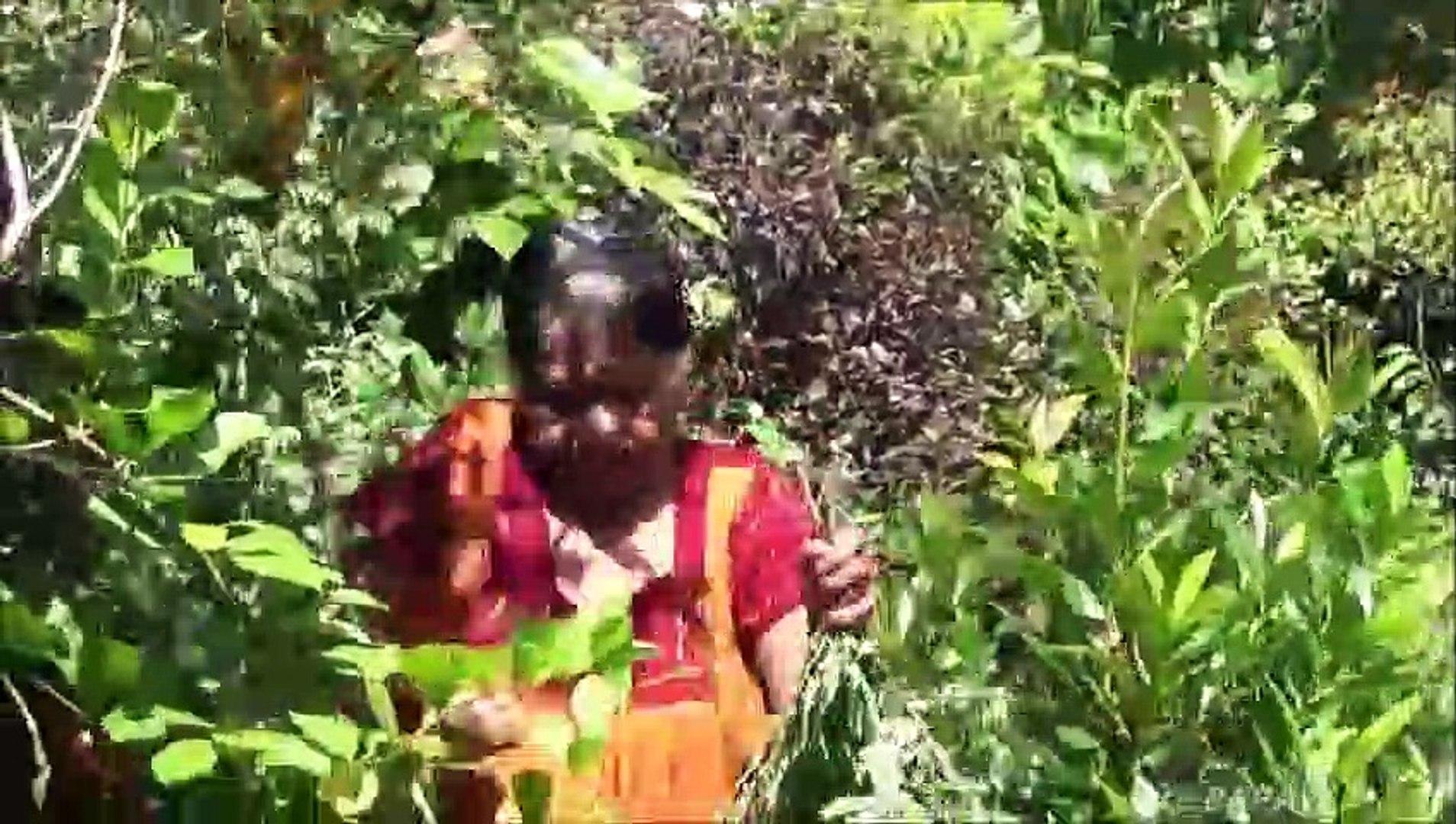Sain Village Aliments  Pilon Feuilles de Curry préparé dans mon Village par ma Maman