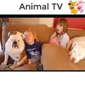 Cute Dogs Babysitting Babies Compilation!