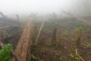 La déforestation empêche la découverte de traitements contre le cancer