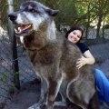 Un chien olfactif atteint d'un cancer en phase terminale est définitivement hébergé dans un refuge pour animaux. Émouvant !
