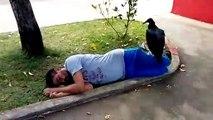 Quand un vautour vient se poser sur un homme qui dort. Mauvais signe