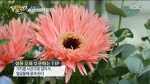 [Power Magazine] The season of flowers, how to give flowers gifts ,파워매거진 20190510