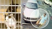 Kittens Abandoned Beside Dumpster Rescued