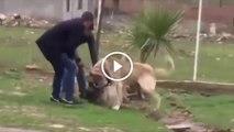 BiR ANLIK DiKKATSiZLiK ZOR AYIRDILAR - ANATOLiAN SHEPHERD DOG ATTACKiNG