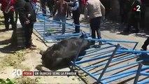 Gard : un taureau s'échappe lors d'une féria