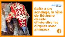 Démocratie : la ville de Béthune interdit les cirques avec animaux