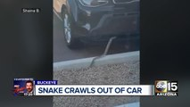 Snake crawls out of Valley woman's car