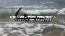 Des kitesurfeurs remarquent un requin aux Estagnots !