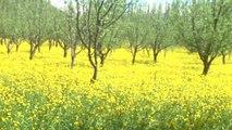 Şemdinli'de Bahar