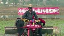 La saison de plantation de riz commence en Corée du Nord