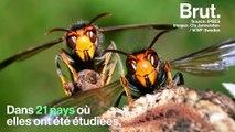 Climat, pollution, surexploitation… Les 5 causes de l'effondrement des espèces