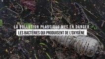 Le plastique tue 10 % des bactéries qui produisent l'oxygène que l'on respire