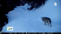 Skyrace, Loup en Belledonne, Village au parc Grégory Lemarchal - 15 MAI 2019