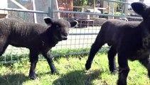 New Residents At Rice Lane Farm!