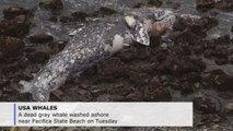 Dead whale washed up in San Francisco Bay, 10th in two months