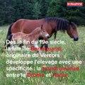 Le cheval du Vercors de Barraquand est en pleine renaissance