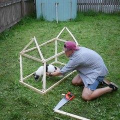DIY Dog house illusion.