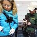 Bonne nouvelle: deux louveteaux sont nés au parc Alpha (et ils sont trop mignons)