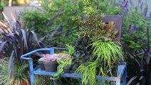 Designing a Vertical Garden