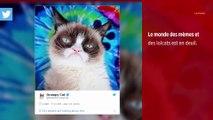 Grumpy Cat, le chat millionnaire le plus célèbre d'Internet, est mort